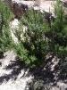 Herbes i arbusts